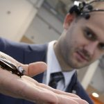 Ливанов предложил сделать массовое производство калининградских роботов-тараканов