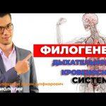 Эволюция дыхательной и кровеносной системы